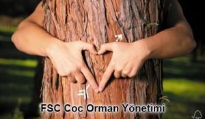 fsc belgesi orman yönetimi